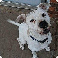 Adopt A Pet :: Shelby - Weatherford, TX