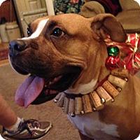 Adopt A Pet :: Pippin - Windermere, FL