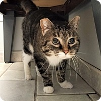Adopt A Pet :: Gracie - Seattle, WA