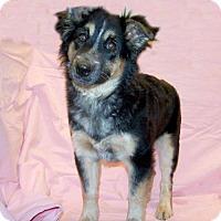 Adopt A Pet :: 17-d01-025 Dixie - Fayetteville, TN