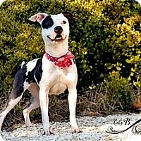 Adopt A Pet :: June Bug - Charlotte, NC