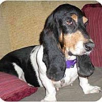 Adopt A Pet :: Zoe - Phoenix, AZ