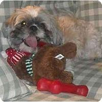 Adopt A Pet :: Marley - Mesa, AZ