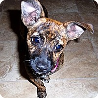 Adopt A Pet :: Gretel - Lake Elsinore, CA