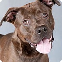 Adopt A Pet :: Byson - Chicago, IL