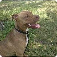 Adopt A Pet :: Slurpee - Reisterstown, MD