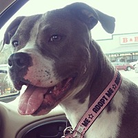 Pit Bull Terrier Dog for adoption in Somerville, Texas - Phoebe