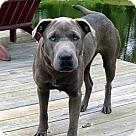 Adopt A Pet :: COSSIA