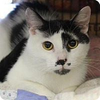 Adopt A Pet :: Lomasi - Caistor Centre, ON