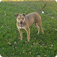 Adopt A Pet :: Zeus - Lima, OH