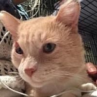 Adopt A Pet :: Sabastian - Livonia, MI