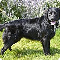 Adopt A Pet :: Keera - Meridian, ID