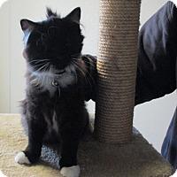 Adopt A Pet :: Uli - Pinedale, WY