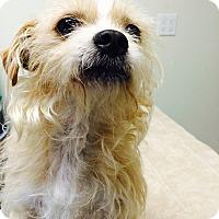 Adopt A Pet :: Navidad - Seattle, WA