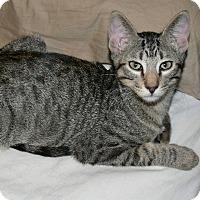 Adopt A Pet :: Zeus - Garland, TX