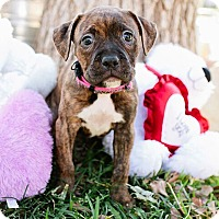 Adopt A Pet :: Forever - Austin, TX