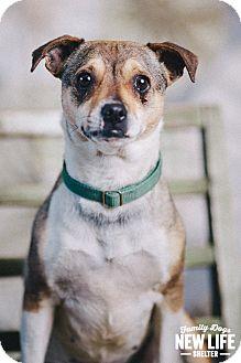 Australian Cattle Dog/Beagle Mix Dog for adoption in Portland, Oregon - Poppy