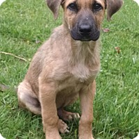 Adopt A Pet :: Baxter - New Oxford, PA