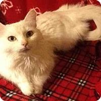 Adopt A Pet :: PETUNIA - San Antonio, TX