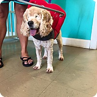 Adopt A Pet :: Riley - Russellville, KY