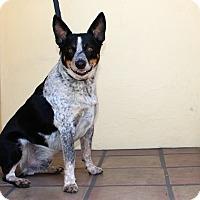 Adopt A Pet :: Jake - AMAZING!!! - Los Angeles, CA