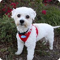 Adopt A Pet :: BOO - Newport Beach, CA