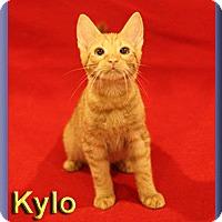 Adopt A Pet :: Kylo - Aldie, VA