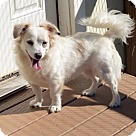 Adopt A Pet :: Tiger Lily