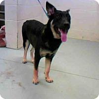 Adopt A Pet :: MAJOR - Conroe, TX