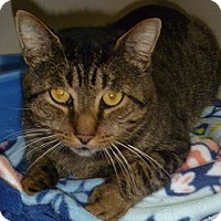 Adopt A Pet :: Shadow Joe - Hamburg, NY