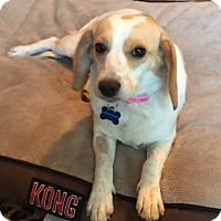 Adopt A Pet :: Maggie - Williamsburg, VA