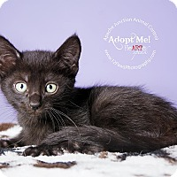Adopt A Pet :: Coal - Apache Junction, AZ