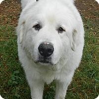 Adopt A Pet :: WINTER - Granite Bay, CA