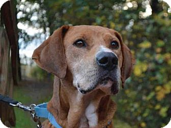 Treeing Walker Coonhound Mix Dog for adoption in Pittsburgh, Pennsylvania - LEILAND