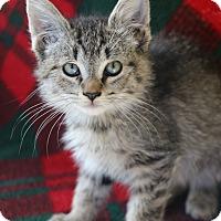 Adopt A Pet :: Andrea - Yucaipa, CA