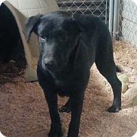 Adopt A Pet :: Robbie - Union City, TN