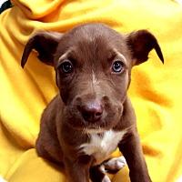 Adopt A Pet :: Caramello-Adopted! - Detroit, MI