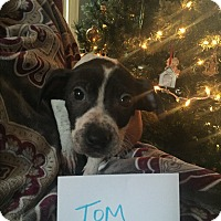 Adopt A Pet :: Tom - Colonial Heights, VA