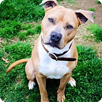Adopt A Pet :: Rush - South Park, PA