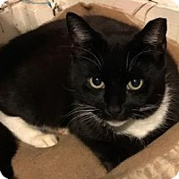 Adopt A Pet :: Fujiko - New York, NY