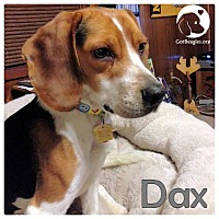 Adopt A Pet :: Dax - Pittsburgh, PA
