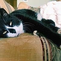 Adopt A Pet :: Georgie - Merrifield, VA