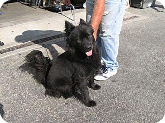 Scruffy | Adopted Dog | 1405278 | Marina del Rey, CA ...