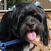 Adopt A Pet :: Katie - Orange, CA
