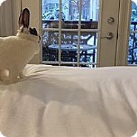 Adopt A Pet :: Rosalie - Conshohocken, PA