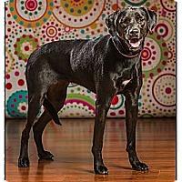 Adopt A Pet :: Jasmine - Owensboro, KY