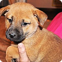 Adopt A Pet :: Conrad - Phoenix, AZ