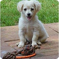 Adopt A Pet :: Adam - New Boston, NH