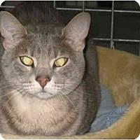 Adopt A Pet :: Lokki - Mission, BC