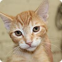 Adopt A Pet :: Corey - Santa Monica, CA